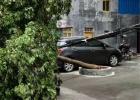"""台风""""圆规""""即将登录来袭,张黄添宝小区一颗绿化树被吹倒"""