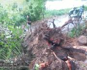 点赞!福旺南山大榕树压倒电线杆,供电及时赶到抢修村民帮忙清理