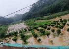 张黄邓平这的庄稼又被淹了,这是第四次被淹了!求处理